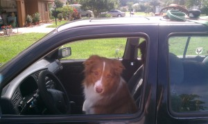 Maybe we should never have let the dog drive.