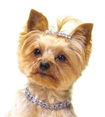 dog and diamond