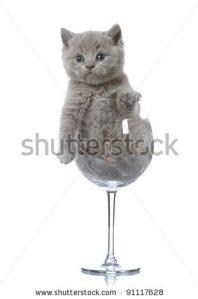 kitten in a glass