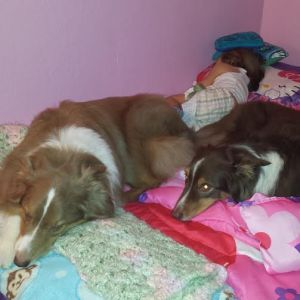 My bed is not the only one they take over.